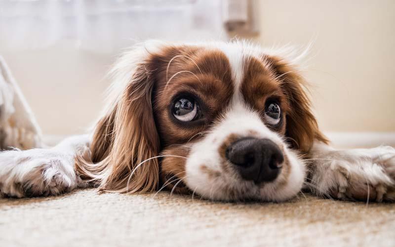 Delo blogpost - come combattere il caldo - cagnolino